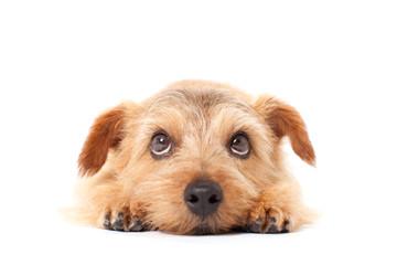 ペットをこっそりかっていたのがばれたら契約解除になる?